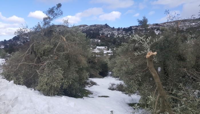 Σε δραματική κατάσταση οι αγρότες της Κρήτης – Τεράστιες οι ζημιές (φωτο)