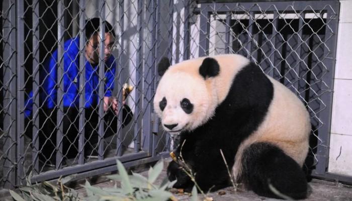 Η Μπά Μπάο «μετακόμισε» στην Κίνα