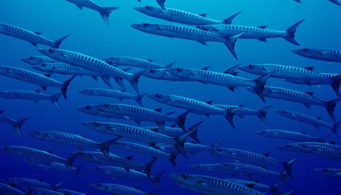 Νέα απειλή από τα ψάρια για τη δημόσια υγεία!