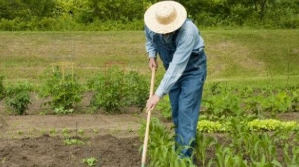Τεράστιο λαχανικό σε περιβόλι Κρητικού!Το μυστικό της επιτυχίας του!