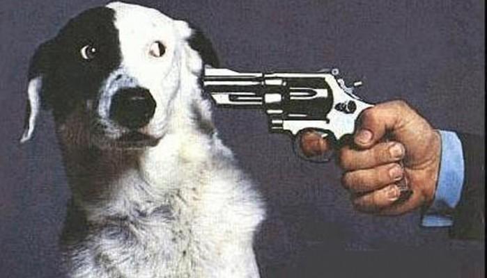 Χανιά:Σκότωσε δύο σκύλους αλλά οι τουρίστες τον