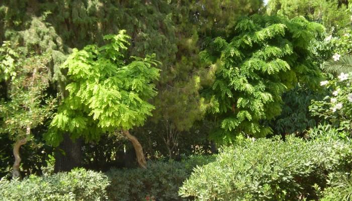 Αρχίζει η υποβολή αιτημάτων για εκδηλώσεις στον δημοτικό κήπο Ρεθύμνου