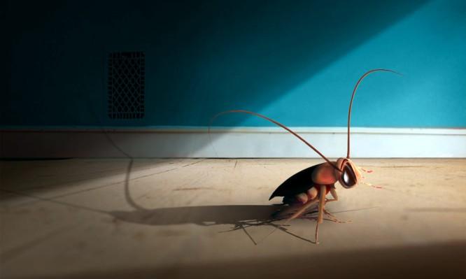 Καταπολέμηση των κατσαρίδων στον Δήμο Αποκορώνου