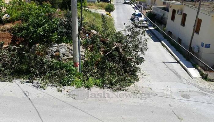 Έκοψαν δέντρο και το παράτησαν στον δρόμο!