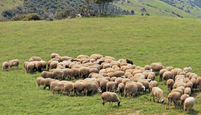 Αναρτήθηκαν οι καταστάσεις  πληρωμής της Δράσης «Βιολογική Κτηνοτροφία έτου