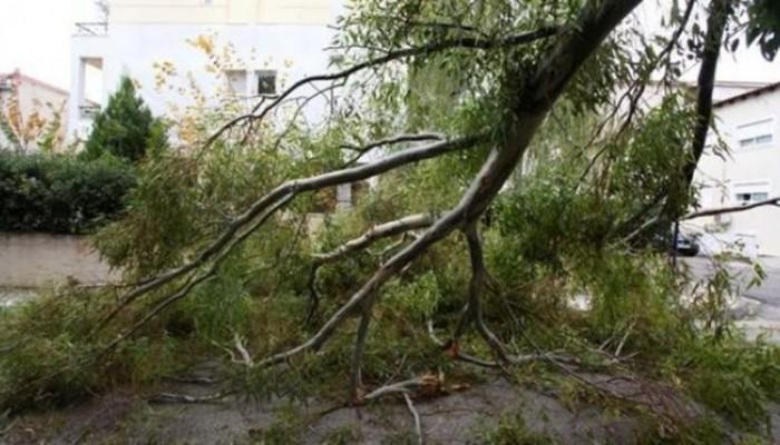 Δέντρο έπεσε πάνω σε αυτοκίνητο στην πλατεία Χορτατσών στα Χανιά
