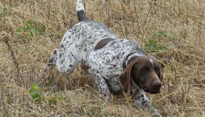 Καταδικάστηκε στρατιωτικός στα Χανιά για κακοποίηση σκύλου