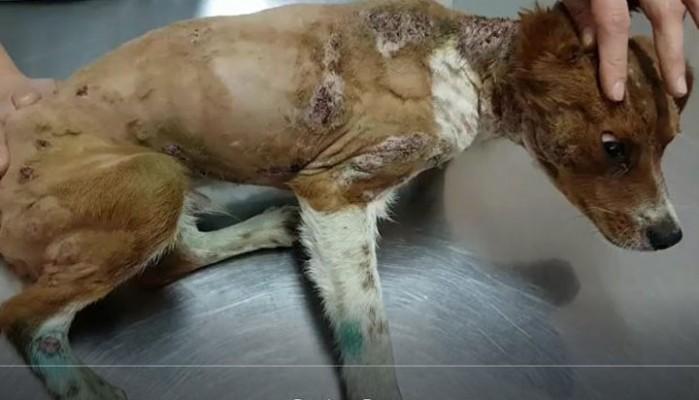 Κτηνωδία στην Κρήτη:Έκαψε τον σκύλο και τον κρέμασε ζωντανό σε δέντρο