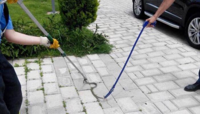 Γέμισε η Τουρκία φίδια πριν τον σεισμό στη Λέσβο- Το ίδιο είχε γίνει το '99