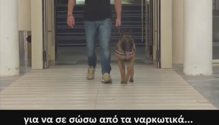 Ο σκύλος Κάλιμαν πρωταγωνιστεί στο σποτ της ΕΛΑΣ για τα ναρκωτικά