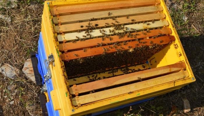 Μιχελογιαννάκης:Καταστροφές στην μελισσοκομία από τον καύσωνα