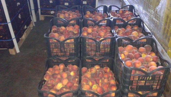 Πάνω από 46.000 κιλά ροδάκινα μοίρασε ο δήμος Πλατανιά
