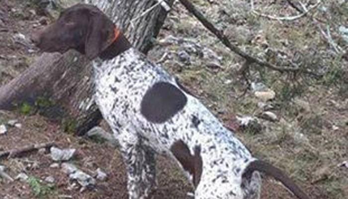 Χάθηκε σκυλί στην περιοχή Καλαμάκι - Γαλατάς (φωτο)