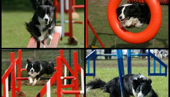 Παιχνίδι ευκινησίας για σκύλους τώρα και στα Χανιά δωρεάν!