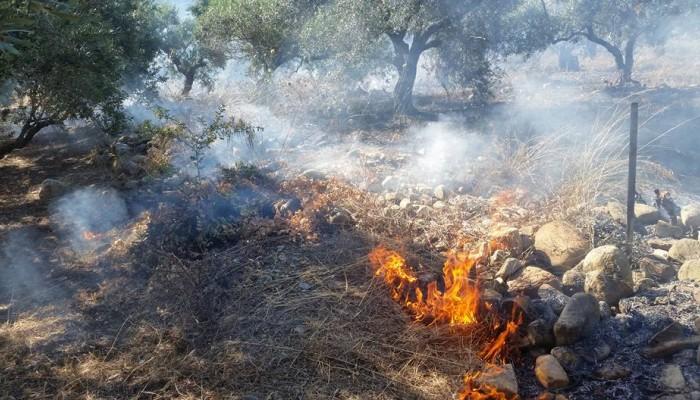 Πυρκαγιά μέσα σε ελαιώνα στις Βουκολιές στα Χανιά (φωτο)