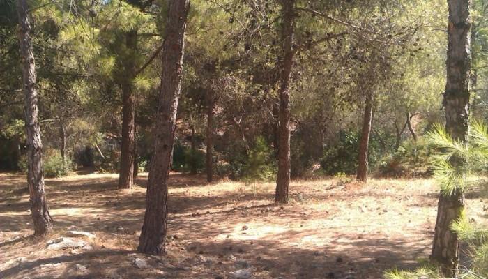 Σε εξέλιξη εργασίες πυροπροστασίας από τον Δήμο Χανίων