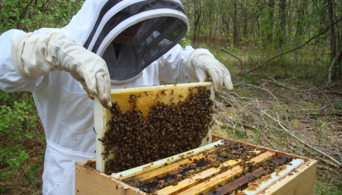 Εξαπατούν μελισσοκόμους στα Χανιά - Ο μελισσοκομικός σύλλογος προειδοποιεί