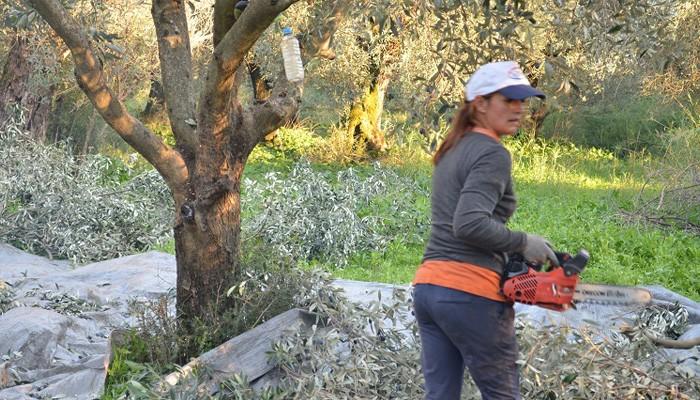 Στους λογαριασμούς 1188 νέων αγροτών Κρήτης τα 17 εκατ. ευρώ