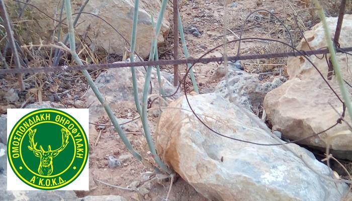 Γέμισε η Κρήτη απο συρματοπαγίδες για λαγούς - Αποκαλύψεις της Θηροφυλακής