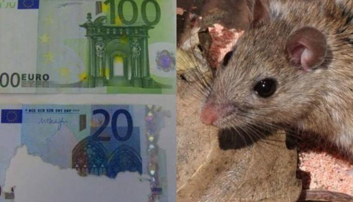 Κρήτη: Πέθανε και βρήκαν στο σπίτι της 30.000 ευρώ φαγωμένα από ποντίκι