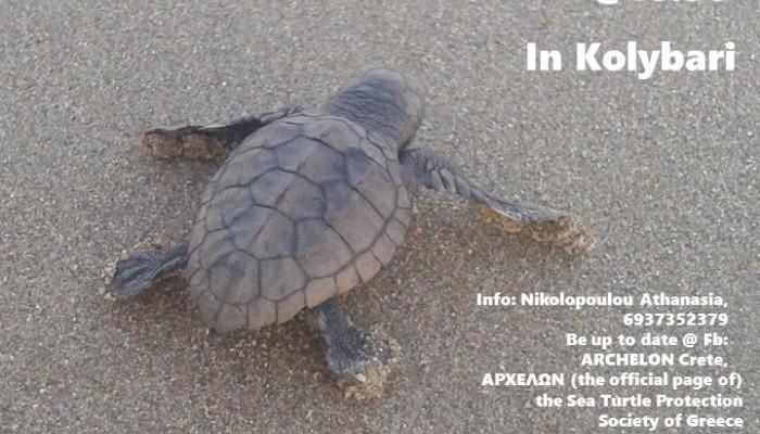 Την Παρασκευή νέα εκσκαφή φωλιάς θαλάσσιας χελώνας στα Χανιά