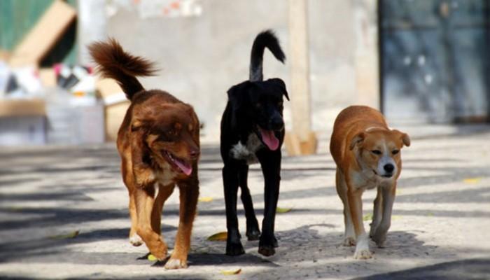 Σε εξώδικο στον δήμο Χανίων προχωρά ο φιλοζωικός σύλ. για κακοποίηση ζώων