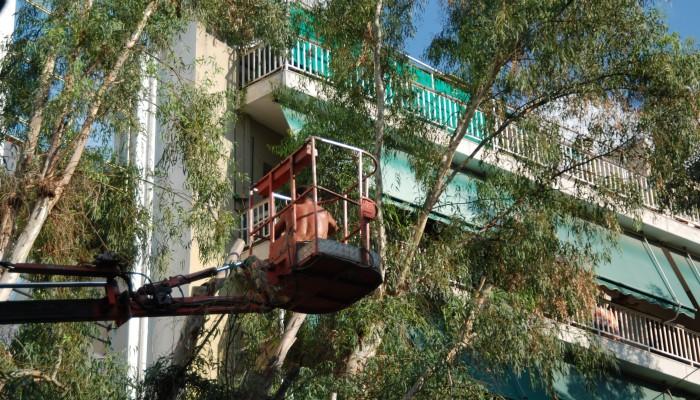 Κλάδεμα δέντρων στις οδούς Ελ Βενιζέλου και Κων. Μητσοτάκη