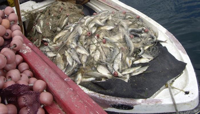 Δωρεάν διανομή ψαριών σε πολύτεκνους του Νομού Χανίων