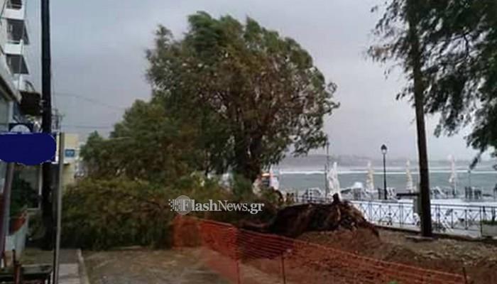 Απίστευτη εικόνα στην παραλία της Νέας Χώρας- Έπεσαν ολόκληρα δέντρα (φωτο)