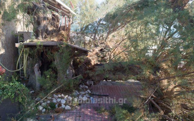 Τα μποφόρ στο Λασίθι ανέτρεψαν φορτηγάκι και έριξαν δέντρα (φωτο)