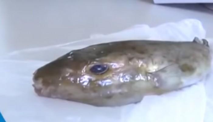 Αγόρασε μαρίδες στα Χανιά και βρήκε λαγοκέφαλο! (βίντεο)