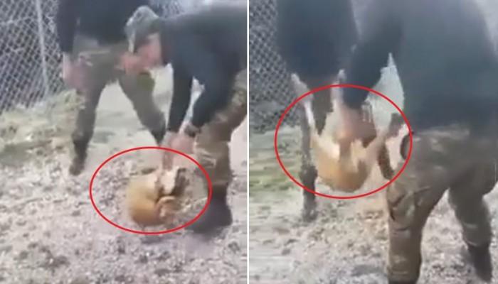 Ανακοίνωση του ΓΕΣ για το σοκαριστικό βίντεο με φαντάρους που πέταξαν σκύλο