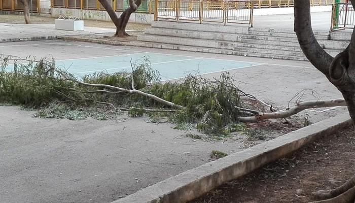 Μεγάλο κλαδί έπεσε στην αυλή σχολείου στα Χανιά – Ευτυχώς που ήταν κλειστό