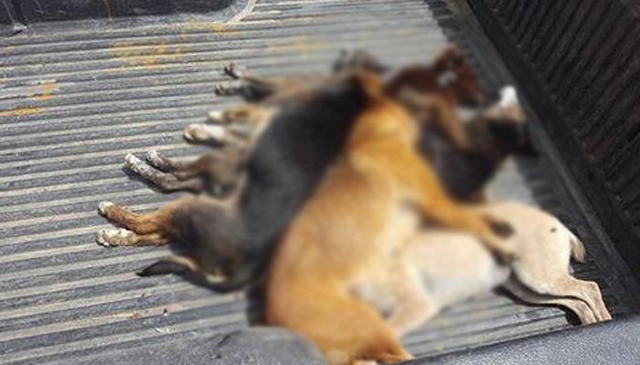 Μαζική δηλητηρίαση σκυλιών στην Μυρτιά Ηρακλείου (φωτο)