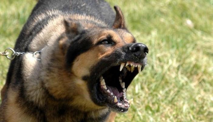 Σκύλος κυνήγησε κλέφτες στη Λήμνο - Αποδείχτηκε εξαιρετικός φύλακας