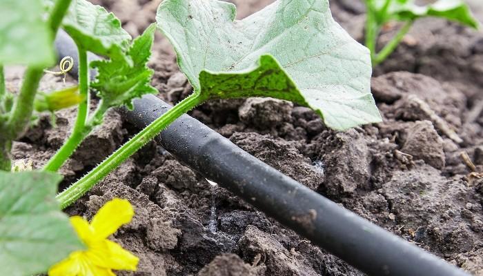Δελτίο άρδευσης για τις καλλιέργειες στην Κρήτη από 9 έως 15 Ιουλίου