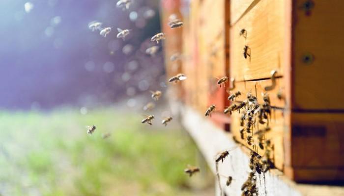Μελισσοκόμοι: Στα 3,39 ευρώ ανά κυψέλη η έκτακτη αποζημίωση χωρίς περιθώριο αύξησης