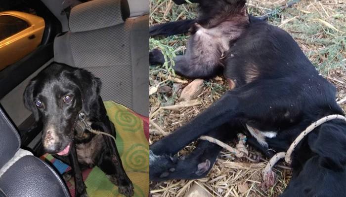 Αναζητείται εκείνος που κακοποίησε βάναυσα σκυλί στον Βατόλακκο στα Χανιά
