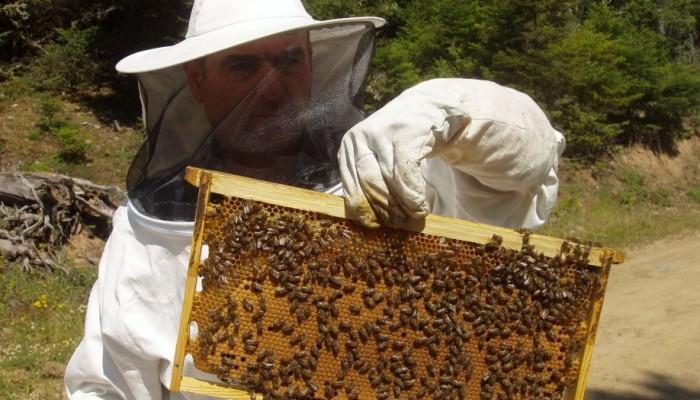 Ρέθυμνο: Ενημέρωση για τους μελισσοκόμους