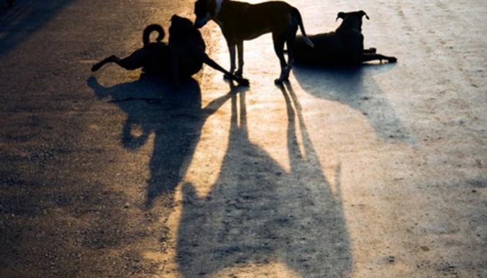 Συνεχίζεται & διευρύνεται ο διαγωνισμός του Δήμου Χανίων για τα ζώα