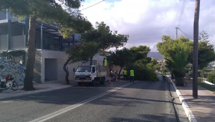 Σε ποιους δρόμους των Χανίων θα γίνει εκτροπή κυκλοφορίας λόγω κλαδέματος δέντρων