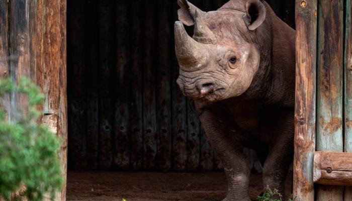 Νεκροί δύο σπάνιοι και απειλούμενοι μαύροι ρινόκεροι σε πάρκο του Τσαντ