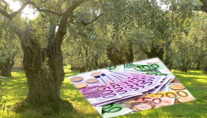 COVID:Διευκρινίσεις για την αποζημίωση ελαιοπαραγωγών και την ενίσχυση για την αναμπέλωση