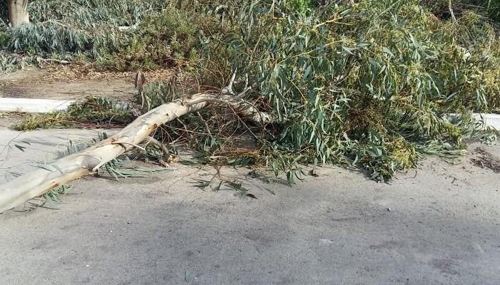 Οι θυελλώδεις άνεμοι έριξαν δέντρα στα Χανιά