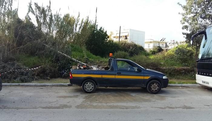 Συντήρηση και προστασία στις δενδροστοιχίες της πόλης τη Δευτέρα 13 Απριλίου