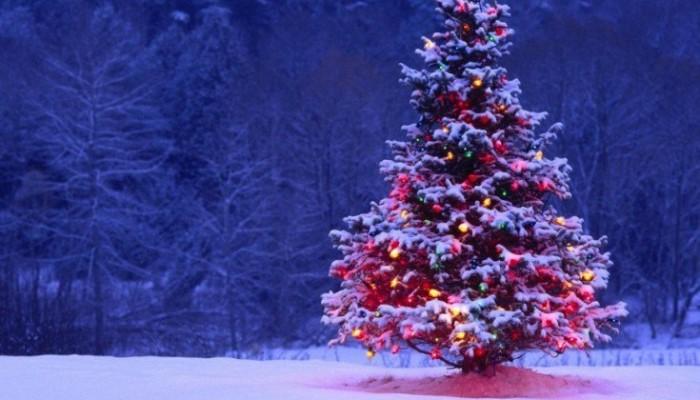 Δήμος Πλατανιά: Φωταγώγηση χριστουγεννιάτικου δέντρου την Τετάρτη (11/12)