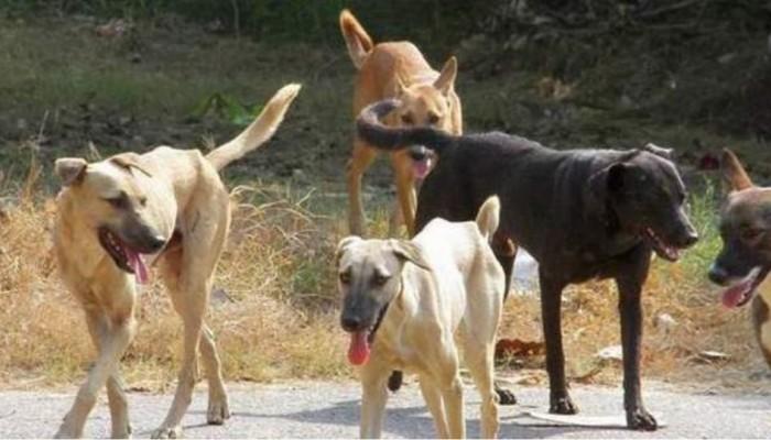 Αδέσποτα σκυλιά επιτέθηκαν σε Χανιώτη στην περιοχή του Ξενία (φωτο)