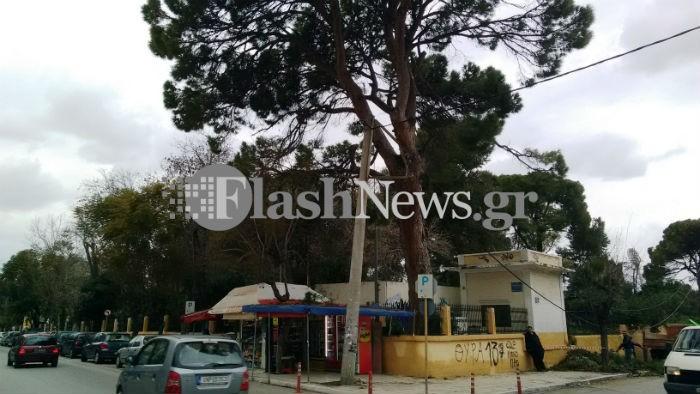 Επικίνδυνη κατάσταση: Πεύκο και κολώνα ρεύματος «αλληλοστηρίζονται» στον Κήπο των Χανίων