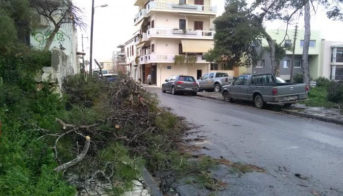 Κόπηκε και απομακρύνθηκε το δέντρο που