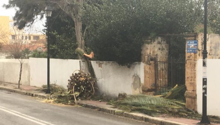 Φοίνικας έπεσε στη Χαλέπα (φωτο)